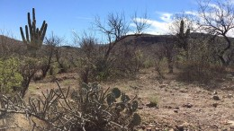 The landscape at Bacanora Minerals' Sonora Lithium project in northern Mexico. Source: Bacanora Minerals
