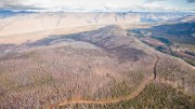 An aerial view of the road connecting camp to the main drill sites at the Coffee gold project in the Yukon's White Gold district. Source: Kaminak Gold.
