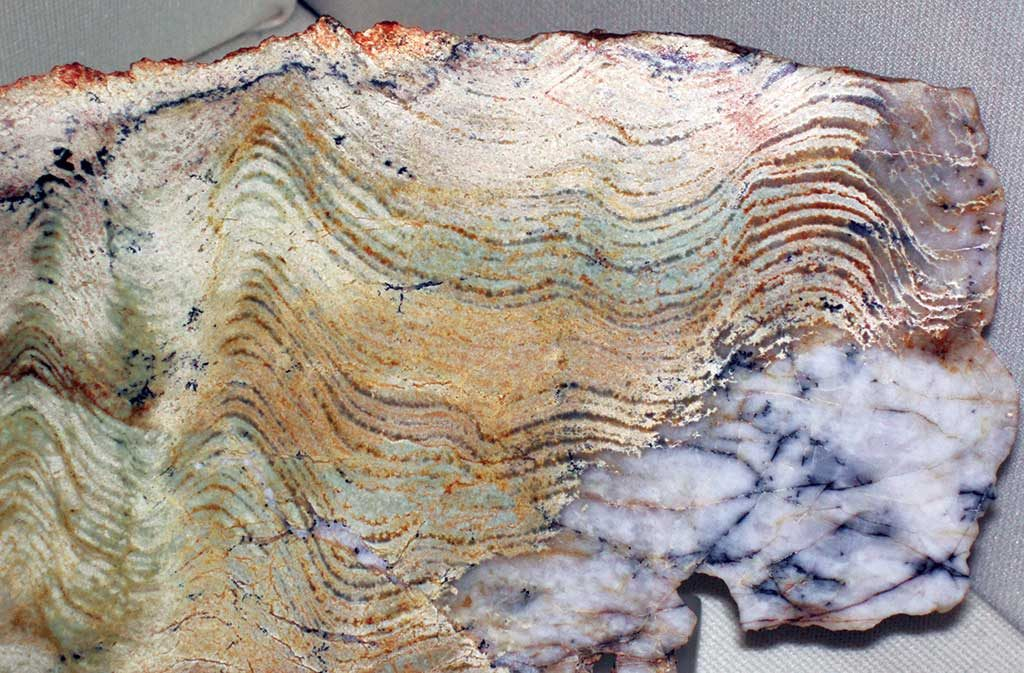 A 3.5-billion-year-old stromatolite sample, extracted from the oldest known definite fossil occurrence on earth in Western Australia's Pilbara craton. Photo by James St. John.