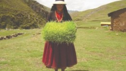 In an effort to strengthen relations with the locals at its Las Bambas project in Peru, Xstrata Copper has established programs to teach local farmers more effective cultivation techniques.