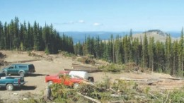 Goldcliff has just released the results from it 2008 drilling program on the York-Viking zone of its Panorama Ridge gold property near Hedley, B.C.