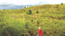 The lush hilltop at Mindoro Resources' Agata nickel laterite project in the Phillipines' southern Mindanao region.