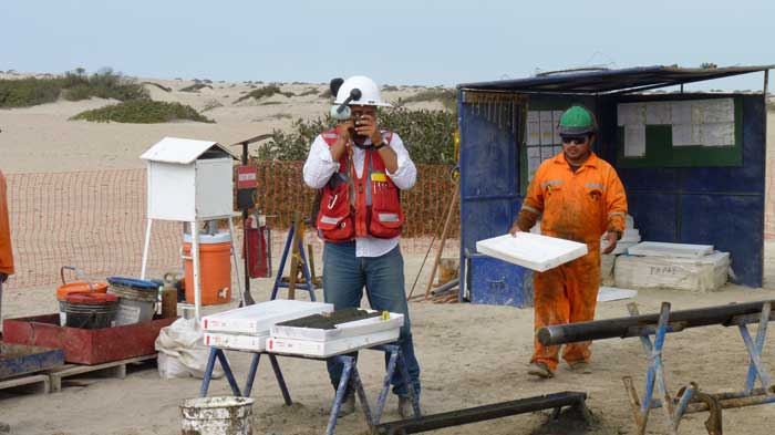 Senior project geologist Hector Canales Lancho (left) inspects core at Focus Ventures' Bayovar 12 phosphate project in northern Peru. Credit: Focus Ventures