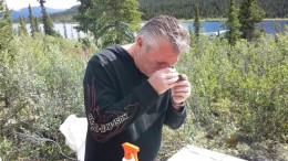 William Chornobay, Goldstrike Resources chief operating officer, examines a core sample from the Plateau South gold project, 300 km east of Dawson City in the Yukon. Credit: Goldstrike Resources