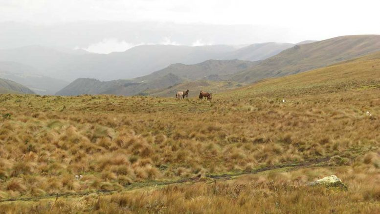 INV Metals' Loma Larga gold project in Ecuador. Photo by Trish Saywell.