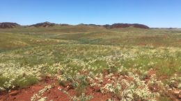 Novo Resources and Artemis Resources' Purdy's Reward and Comet Wells paleoplacer gold projects in Western Australia. Credit: Novo Resources.