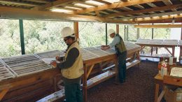 Workers logging core at Mexican Gold's Las Minas project in Mexico. Credit: Mexican Gold.