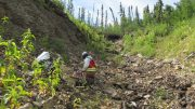 Mapping and sampling gold-bearing quartz veins exposed in old trenches near the Nugget Zone on Klondike Gold Corp.'s exploration ground in Yukon Territory. Credit: Klondike Gold Corp.