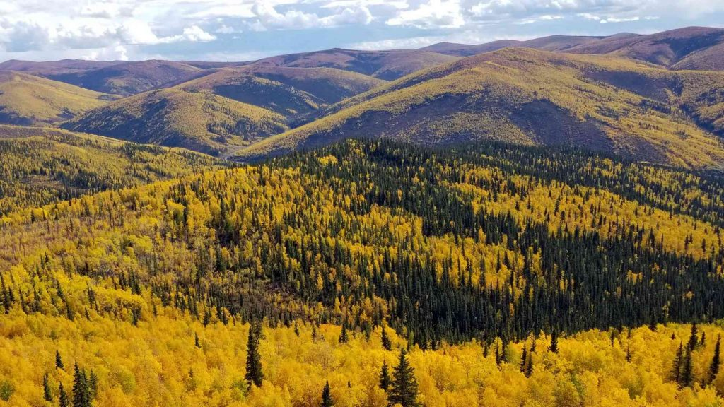 The Titan discovery area on White Gold's Hen property in west-central Yukon. Credit: White Gold.